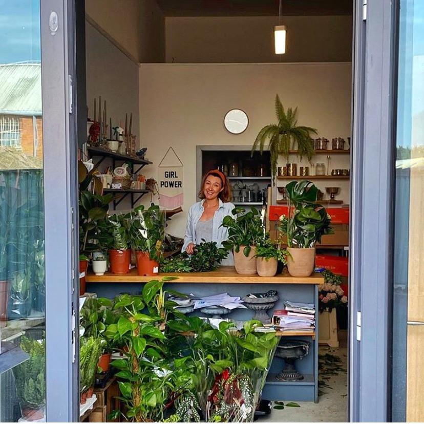 Devon houseplant shop