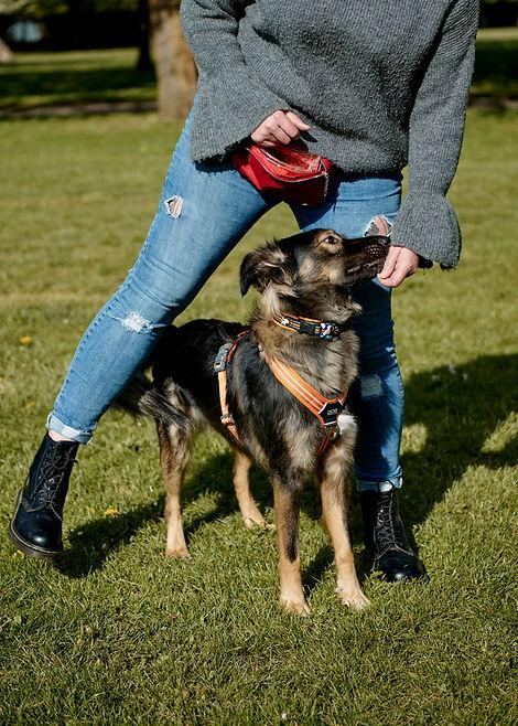 Dog behaviour training Lewisham