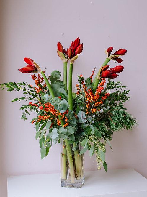 amaryllis Christmas flowers bristol bristol flower delivery bristol florist bristol bouquet delivery