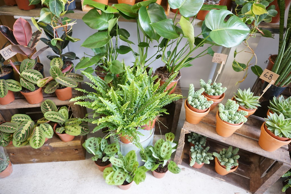 house plant florist shop