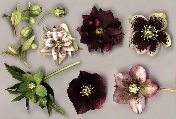 Essential guide to winter flowers