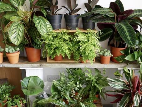 House Plant Pop Up Shop