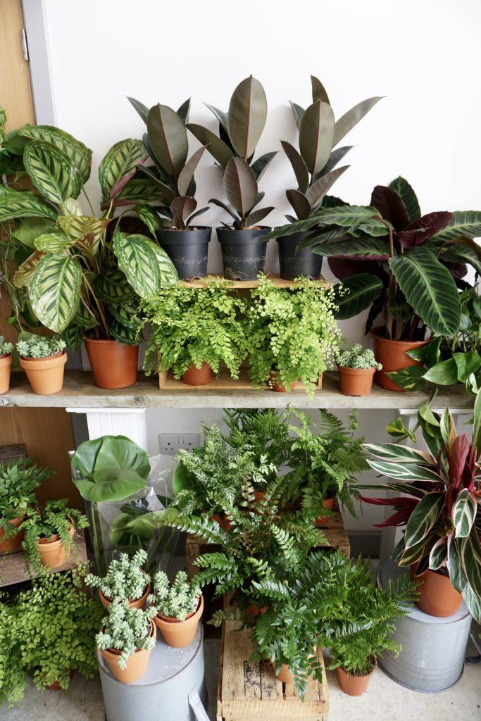 Houseplants in Bristol