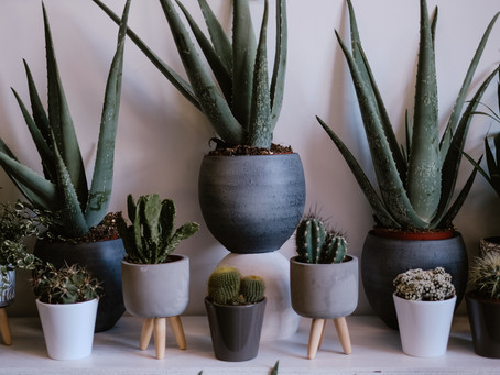 How to keep your houseplants alive in Winter