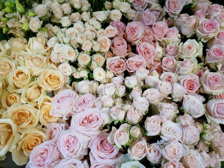 Beautiful wedding rose varieties