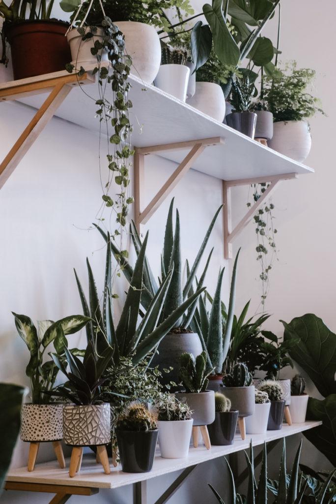 House plant shop in Bristol