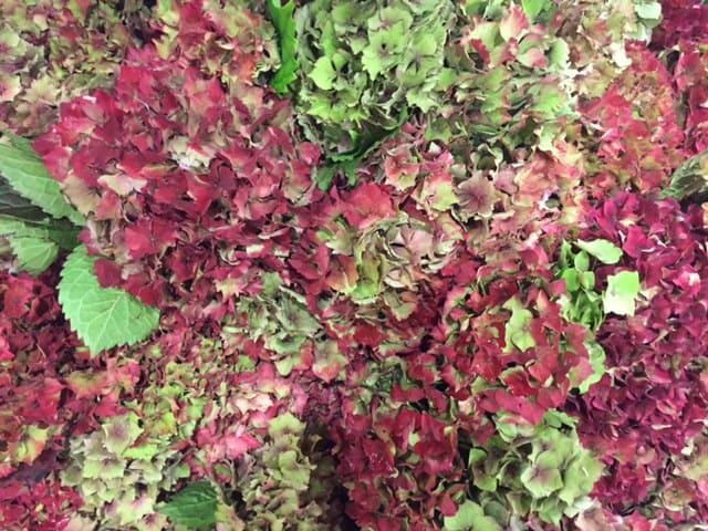 bristol florist | autumn wedding flowers | florist blog | luxury flowers | wedding flower inspiration | top ten autumn flowers