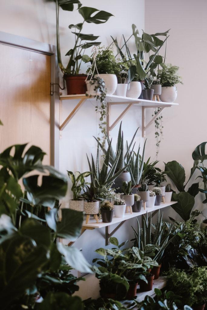 Houseplant pop up shop