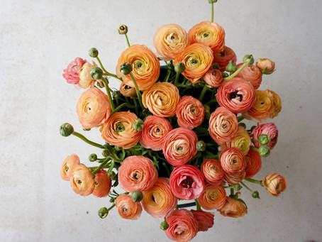 Those Ranunculus…!