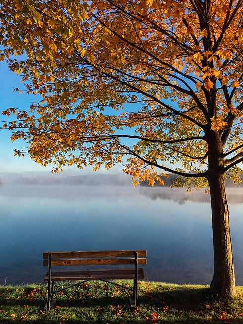aaron-burden- tree bench-unsplash.jpg