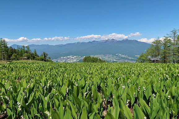 湿原とすずらんを満喫「入笠山」