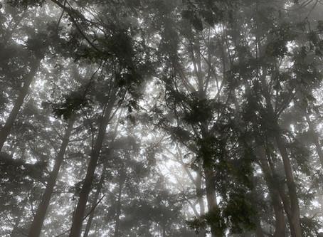 【レポート】低山再発見の旅!#1「御岳山」
