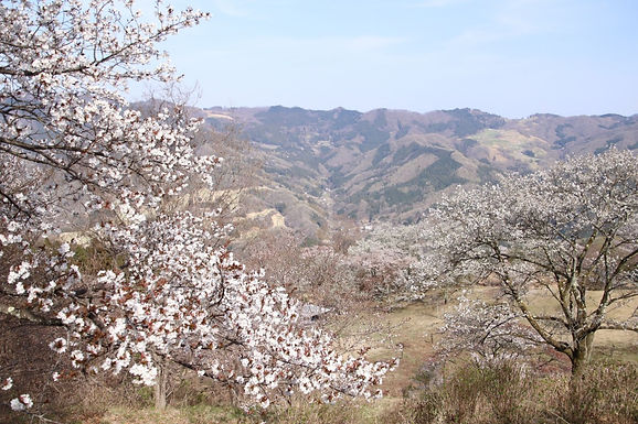 展望と季節の花を楽しむ「簑山