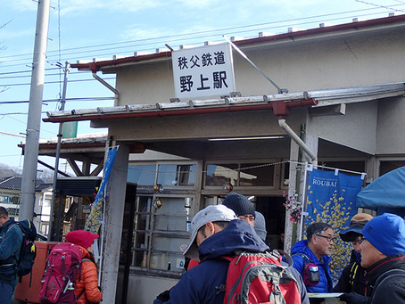 【レポート】長瀞アルプス 蝋梅の香りかおる宝登山