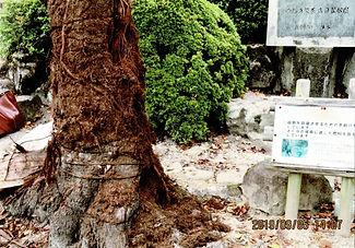 霞城文化自然保勝会photoscan02.jpg