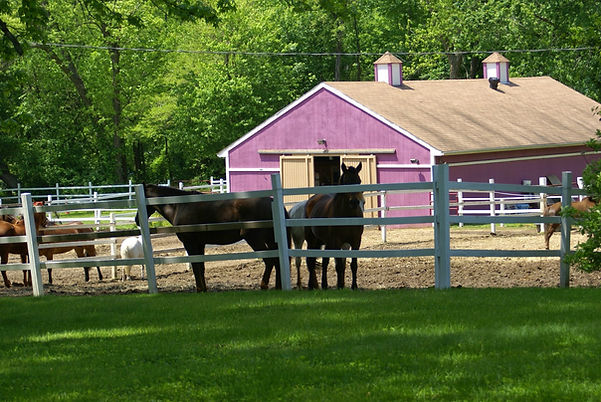 Big Purple Barn and horses