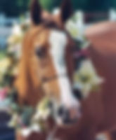 Nova_Flower_Portrait.jpg