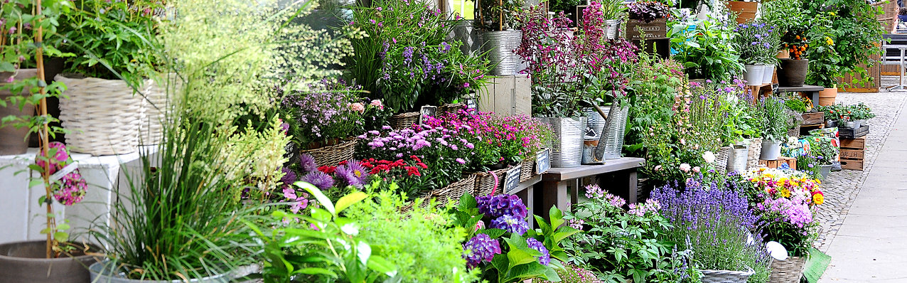 Balcony, flowers, plants, pots, terrace greening, urban gardening, garden, herbs, trees, fairtrade