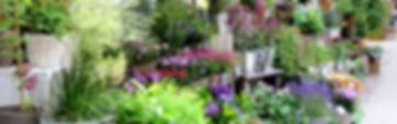 Floristik Prenzlauer Berg, Berlin, Blumen, Pflanzen, Erde, Balkonbepflanzung