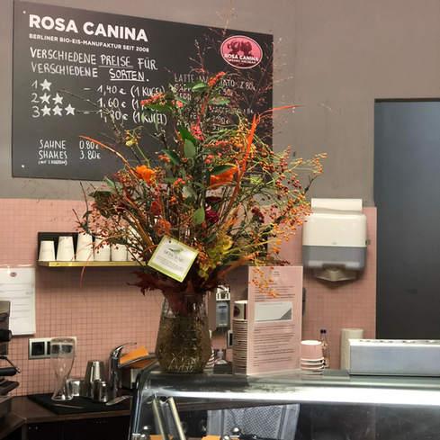 Rosa Canina Berlin