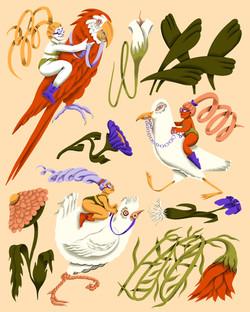Bird Rodeo