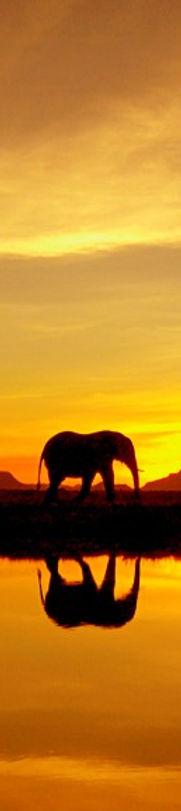 Marula-Tree-Elephant-Sunset.jpg