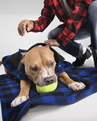 Dog-à-Porter – heute ist Welthundetag!