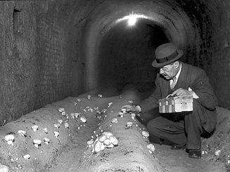 2016273758-lindwurmtunnel-alt_Schwammerl
