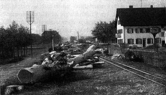 1904_Ungererstrasse_Bäume.jpg