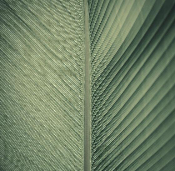 Leaf_edited.jpg