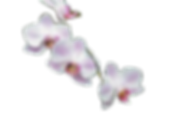 images__2_-removebg-preview.png