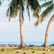 Nene and Palms