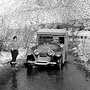 The Organic Car Wash