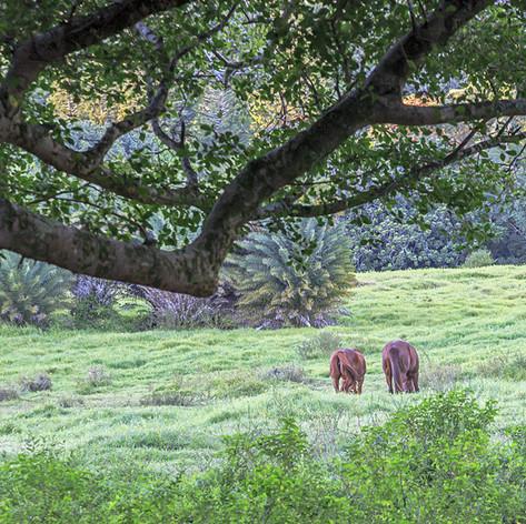 Pastorial Pasture