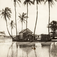 Living at The Rice Paddy