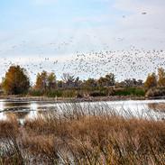 Greylodge Wildlife Refuge Area