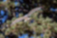 tahoe-gull.jpg