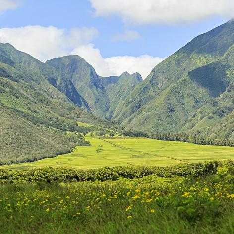 Above Maui Tropical Plantation