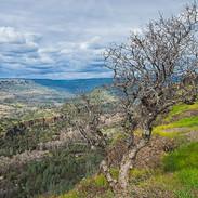 Butte Creek Canyon