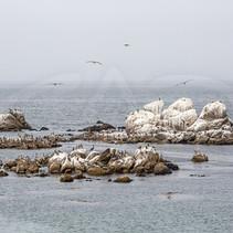 Guano Island