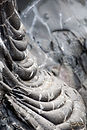 4-ropey-pahoehoe_web.jpg