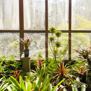 Hothouse View