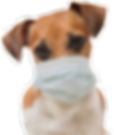doginmask-1080x675.png