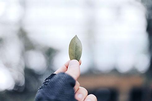 Holding Leaf