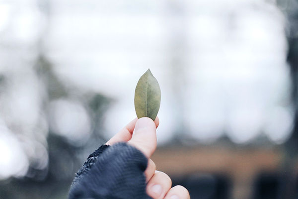 Leaf Peace Charley Roux Acupuncture