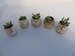 Owl ceramic pots