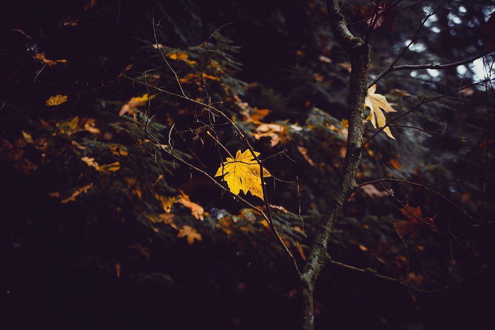 Yellow Leaf Dead Tree.jpg