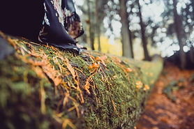 Tree trunk and witch tail.jpg