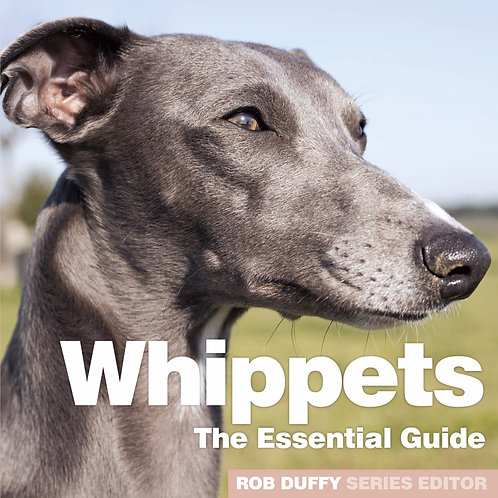 Whippets The Essential Guide