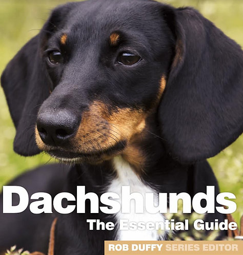 Dachshunds The Essential Guide